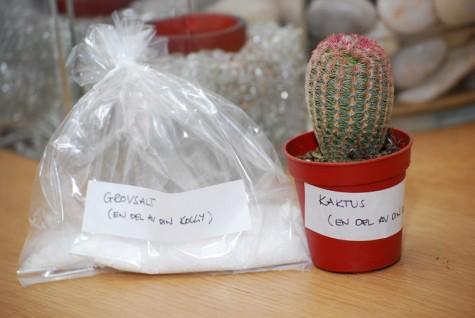 Kaktus och Grovsalt