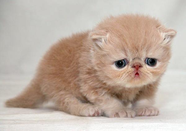 Vill du ha denna kattunges liv på ditt samvete?